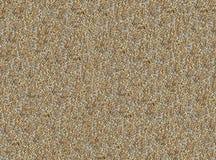 Σύνολο αμυγδάλων καρυδιών σύστασης πυρήνων των κοχυλιών των πετρών στην παραλία Στοκ Εικόνα