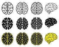 Σύνολο ανθρώπινων εγκεφάλων Στοκ φωτογραφία με δικαίωμα ελεύθερης χρήσης