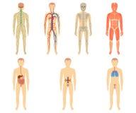Σύνολο ανθρώπινων οργάνων και συστημάτων Στοκ Εικόνες