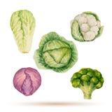 Σύνολο λαχανικών watercolor Στοκ φωτογραφία με δικαίωμα ελεύθερης χρήσης