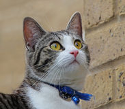 Σύνολο γατών της κατάπληξης Στοκ εικόνες με δικαίωμα ελεύθερης χρήσης