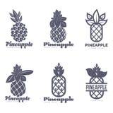 Σύνολο γραπτών γραφικών προτύπων λογότυπων ανανά διανυσματική απεικόνιση