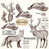 Σύνολο λεπτομερών διάνυσμα ζώων για το σχέδιο Στοκ Εικόνες