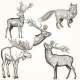 Σύνολο λεπτομερών διάνυσμα ζώων για το σχέδιο Στοκ εικόνα με δικαίωμα ελεύθερης χρήσης