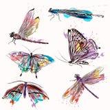 Σύνολο λεπτομερών διανυσματικών πεταλούδων για το σχέδιο Στοκ Φωτογραφίες