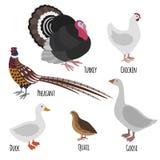 Σύνολο εσωτερικών πτηνών, πουλιά κινούμενων σχεδίων φαρμάτων πουλερικών Στοκ Εικόνα