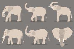 Σύνολο λευκών ελεφάντων ελεύθερη απεικόνιση δικαιώματος