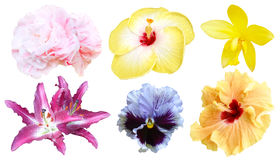 Σύνολο ζωηρόχρωμου λουλουδιού που απομονώνονται, εποχή άνοιξης χλωρίδας πλήρους άνθισης Στοκ φωτογραφία με δικαίωμα ελεύθερης χρήσης