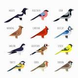 Σύνολο ζωηρόχρωμων εικονιδίων πουλιών Καρδινάλιος, κίσσα, σπουργίτι Στοκ Εικόνες