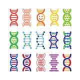 Σύνολο ζωηρόχρωμων εικονιδίων DNA Διανυσματική απεικόνιση