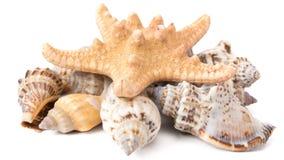 Σύνολο θαλασσινών κοχυλιών με τον αστερία Στοκ φωτογραφία με δικαίωμα ελεύθερης χρήσης