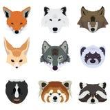 Σύνολο διάνυσμα και εικονιδίου ζώων αλεπούδων και άγριας φύσης λύκων Στοκ Εικόνες
