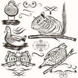 Σύνολο διανυσματικών ζώων και καλλιγραφικών στοιχείων Στοκ Εικόνες