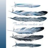 Σύνολο διανυσματικών ρεαλιστικών ζωηρόχρωμων φτερών Στοκ φωτογραφίες με δικαίωμα ελεύθερης χρήσης