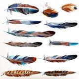 Σύνολο διανυσματικών ρεαλιστικών ζωηρόχρωμων φτερών Στοκ εικόνες με δικαίωμα ελεύθερης χρήσης