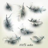 Σύνολο διανυσματικών ρεαλιστικών φτερών Στοκ Εικόνα