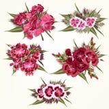 Σύνολο διανυσματικών ρόδινων λουλουδιών στο λεπτομερές και ρεαλιστικό ύφος Στοκ Εικόνες