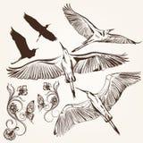 Σύνολο διανυσματικών συρμένων χέρι πουλιών Στοκ Φωτογραφίες