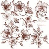 Σύνολο διανυσματικών συρμένων χέρι hibiscus λουλουδιών Στοκ φωτογραφία με δικαίωμα ελεύθερης χρήσης