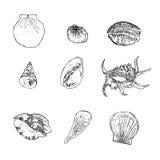 Σύνολο διανύσματος θαλασσινών κοχυλιών στο άσπρο υπόβαθρο Στοκ Εικόνες