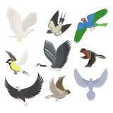 Σύνολο διαφορετικής πετώντας διανυσματικής απεικόνισης πουλιών Στοκ φωτογραφίες με δικαίωμα ελεύθερης χρήσης