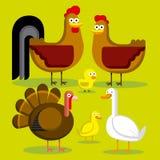 Σύνολο διαφορετικών πουλιών του αγροκτήματος που απομονώνεται Στοκ εικόνες με δικαίωμα ελεύθερης χρήσης
