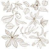 Σύνολο διαφορετικών φύλλων καρυδιών διανυσματική απεικόνιση