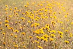 Σύνολο λιβαδιών των άγριων λουλουδιών Στοκ φωτογραφίες με δικαίωμα ελεύθερης χρήσης