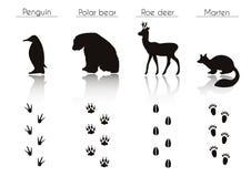 Σύνολο ιχνών ζώων και πουλιών με το όνομα Διανυσματικό σύνολο μαύρου Arct Στοκ φωτογραφία με δικαίωμα ελεύθερης χρήσης