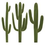 Σύνολο κάκτων Saguaro Στοκ εικόνα με δικαίωμα ελεύθερης χρήσης