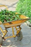 Σύνολο κάρρων κηπουρικής των ξηρών φύλλων Στοκ φωτογραφία με δικαίωμα ελεύθερης χρήσης
