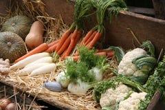 Σύνολο κάρρων των φρέσκων λαχανικών και των εποχιακών φρούτων για το sa Στοκ εικόνα με δικαίωμα ελεύθερης χρήσης
