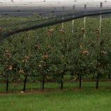 Σύνολο κήπων της Apple των μήλων Στοκ εικόνες με δικαίωμα ελεύθερης χρήσης