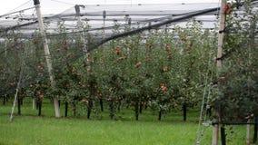 Σύνολο κήπων της Apple των μήλων Στοκ Εικόνες