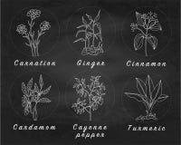 Σύνολο καρυκευμάτων, χορταριών και officinale εικονιδίων εγκαταστάσεων θεραπεύοντας φυτά Στοκ Φωτογραφία