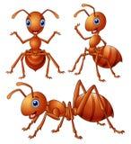 Σύνολο καφετιών κινούμενων σχεδίων μυρμηγκιών διανυσματική απεικόνιση