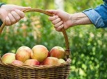 Σύνολο καλαθιών των μήλων Στοκ φωτογραφία με δικαίωμα ελεύθερης χρήσης