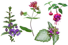 Σύνολο κλάδων λουλουδιών Στοκ Εικόνα