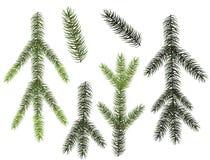 Σύνολο κλάδων χριστουγεννιάτικων δέντρων για το σχέδιό σας Στοκ Εικόνες