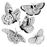 Σύνολο μαύρων σκιαγραφιών πεταλούδων Στοκ Φωτογραφίες