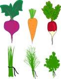 Σύνολο με τα καρυκεύματα και τα λαχανικά Στοκ Εικόνα