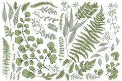 Σύνολο με τα φύλλα και τις φτέρες Στοκ φωτογραφία με δικαίωμα ελεύθερης χρήσης