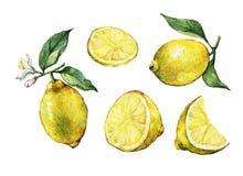 Σύνολο με το σύνολο και φρέσκο λεμόνι εσπεριδοειδούς φετών με τα πράσινα φύλλα και τα λουλούδια ελεύθερη απεικόνιση δικαιώματος