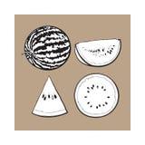 Σύνολο, μισός, τέταρτο και φέτα του ώριμου καρπουζιού, απεικόνιση σκίτσων ελεύθερη απεικόνιση δικαιώματος