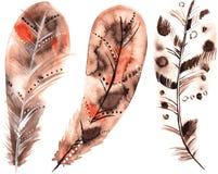 Σύνολο μπεζ φτερών watercolors Στοκ Εικόνες