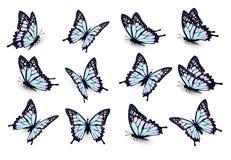 Σύνολο μπλε πεταλούδων, που πετά στις διαφορετικές κατευθύνσεις ελεύθερη απεικόνιση δικαιώματος