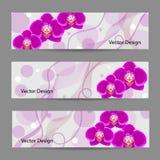 Σύνολο οριζόντιων εμβλημάτων με τα λουλούδια Στοκ Φωτογραφίες