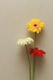 Σύνολο λουλουδιού Gerbera Στοκ Εικόνες
