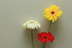 Σύνολο λουλουδιού Gerbera Στοκ εικόνες με δικαίωμα ελεύθερης χρήσης