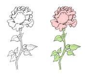 Σύνολο λουλουδιών, γραπτό + ζωηρόχρωμο Στοκ εικόνες με δικαίωμα ελεύθερης χρήσης